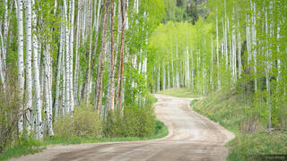 Colorado, San Juan Mountains, Sneffels Range, aspens, road