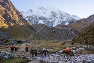 Cordillera Vilcabamba, Nevado Salkantay, Peru, South America, horses