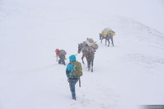 Abra Palomani, Ausangate, Cordillera Vilcanota, Peru, South America, horse