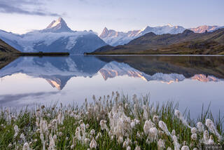 Bachsee, Bernese Alps, Finsteraarhorn, Schreckhorn, Switzerland, reflection, wildflowers, Bernese Oberland, Alps