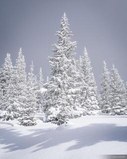 Snow Caked
