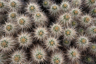 California, Turtle Mountains, cactus, Mojave Desert