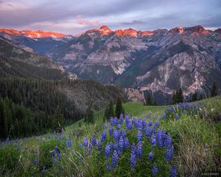 Potosi Peak & Lupine