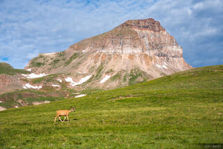 Colorado, San Juan Mountains, Uncompahgre Peak, Uncompahgre Wilderness, deer