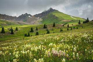 Colorado, Matterhorn Peak, San Juan Mountains, Uncompahgre Wilderness, wildflowers