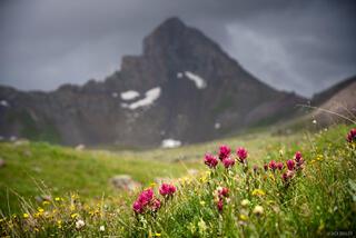 Colorado, San Juan Mountains, Uncompahgre Wilderness, Wetterhorn Basin, Wetterhorn Peak, wildflowers