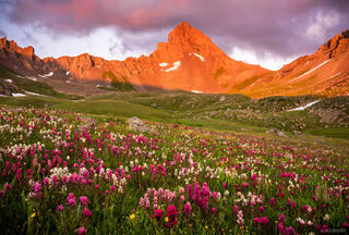 Colorado, San Juan Mountains, Uncompahgre Wilderness, Wetterhorn Basin, Wetterhorn Peak, wildflowers