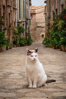Mallorca, Spain, Valldemossa, cat, October