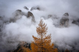 Dolomites, Gruppo del Sella, Italy, Passo Gardena, larch, October, Alps