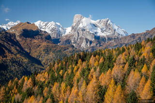 Dolomites, Italy, Marmolada, larch, November, Alps