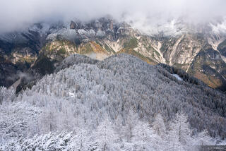 Dolomites, Italy, Parco Naturale delle Dolomiti Fruilane, larch, November, Alps