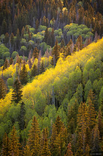 Colorado, San Juan Mountains, Sneffels Range, aspens