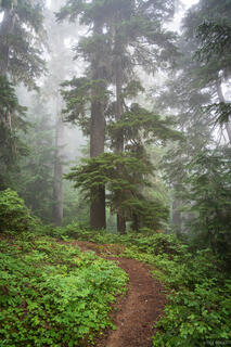 Glacier Peak Wilderness, Washington, trail, Pacific Crest Trail, PCT, Cascades