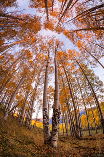 Deep Creek Trail, aspens, autumn, fall, Telluride