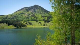 Trout Lake Greens