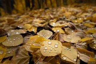 Dappled Droplets