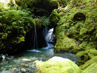 waterfall, Olympic Peninsula, Washington
