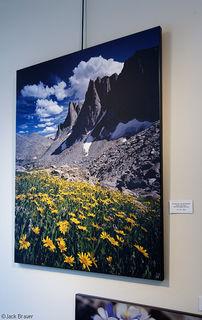Warbonnet Wildflowers, print