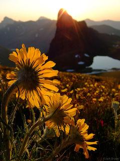 Good Morning, Wildflowers, San Juans, Colorado