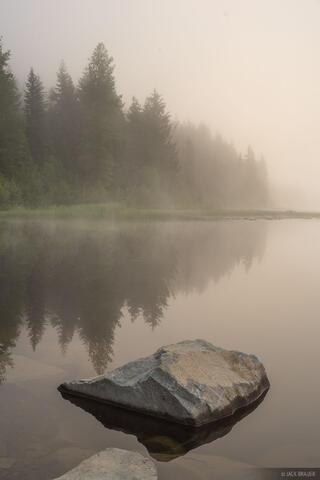 Trillium Fog