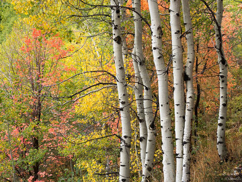 Wasatch Colors