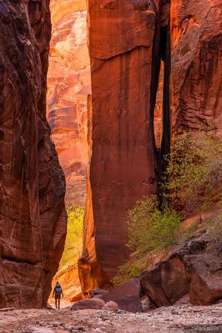 Buckskin Pillar