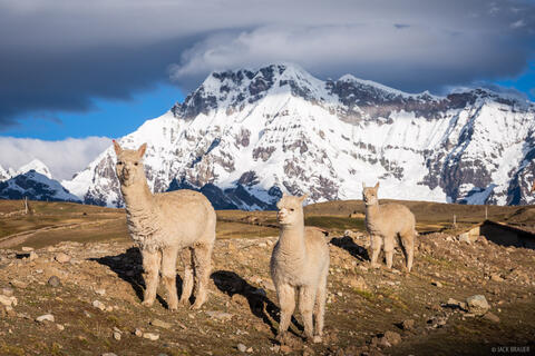 Alpacas and Ausangate
