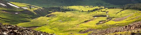 Elk Herd Panorama