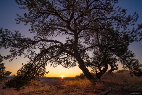 Pinyon Sunrise