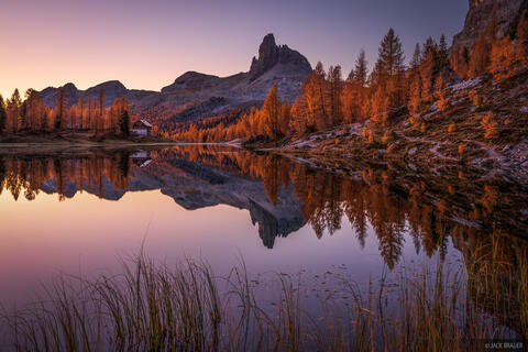 Dawn Larch Reflection