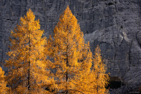 Dolomite Larch