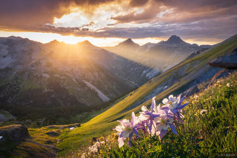 Columbine and Sneffels Sunset