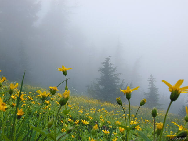 foggy flowers, Washington, Cascades