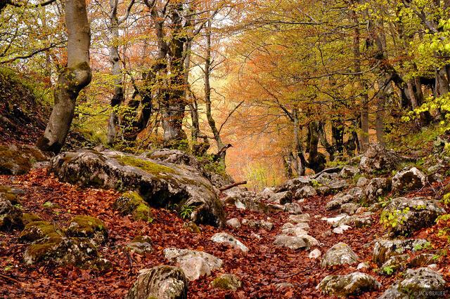 Durmitor Forest