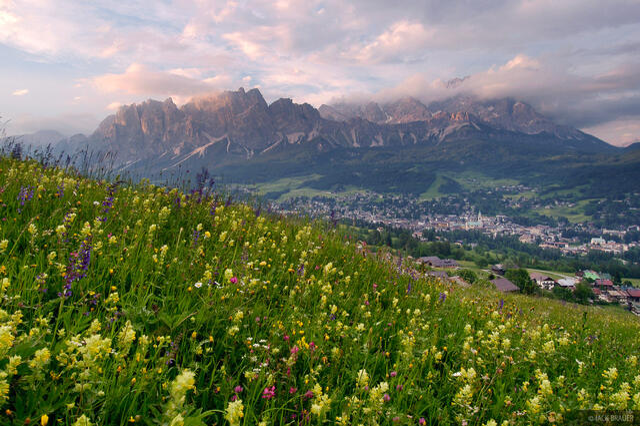 wildflowers, Cristallo, Cortina d'Ampezzo, Dolomites, Italy, Alps
