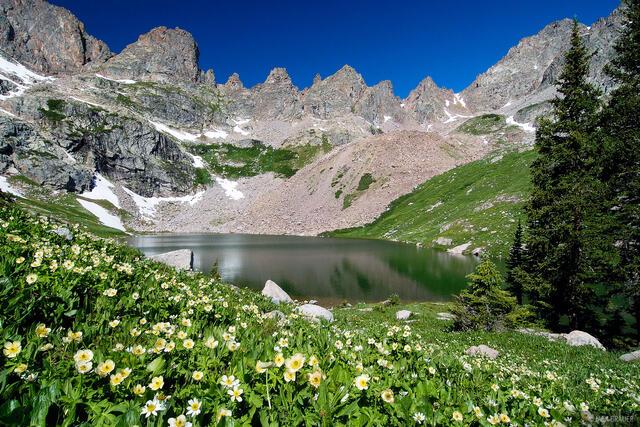Willow Lake Wildflowers