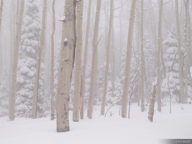 aspens, San Juan Mountains, Colorado, winter, snow