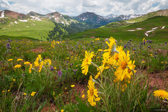 Purity Basin, sunflowers, Elk Mountains, Colorado, July, Maroon Bells-Snowmass Wilderness