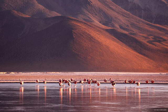 Salar de Surire, flamingos, sunrise