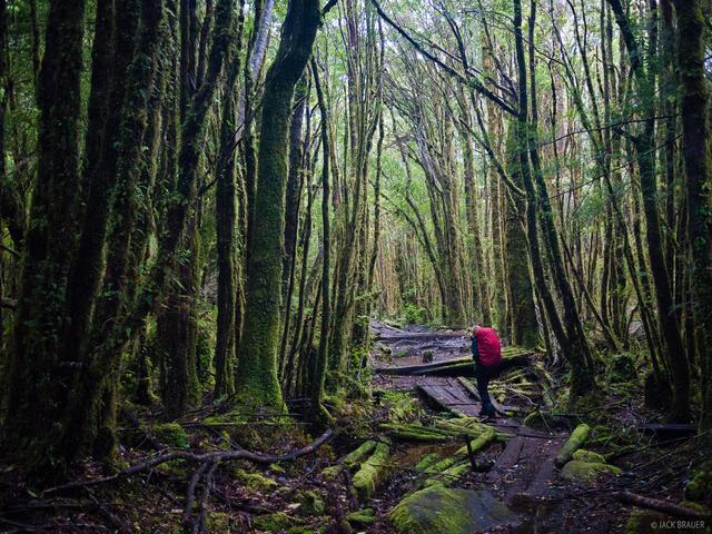 Cochamó, jungle, hiking, Chile, Cochamo