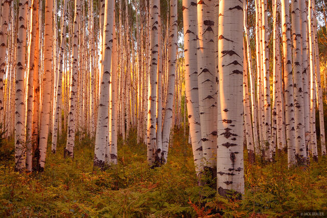 McClure Pass, Colorado, Marble, aspens, sunset, September