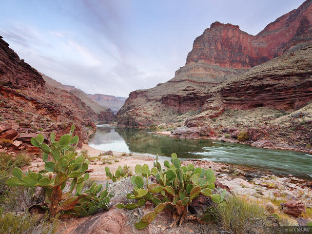 Colorado River, Grand Canyon, Arizona, cactus