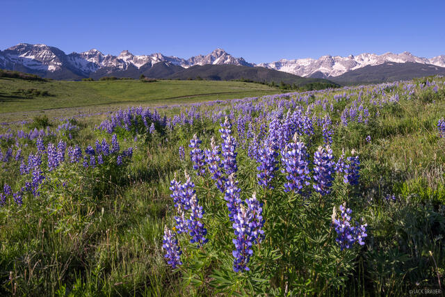 Colorado,San Juan Mountains,Sneffels Range, lupine, wildflowers, June