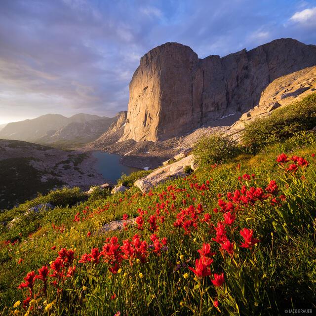 Mount Hooker,Wind River Range,Wyoming,wildflowers, paintbrush