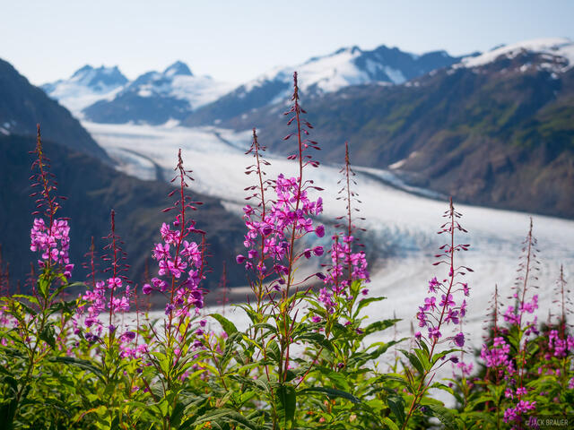 Alaska, Hyder, Salmon Glacier, wildflowers