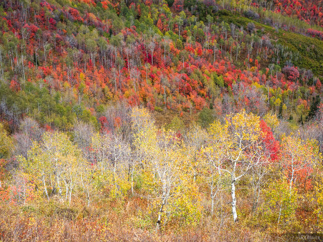 Guardsman Pass, Utah, Wasatch Range, aspens, autumn