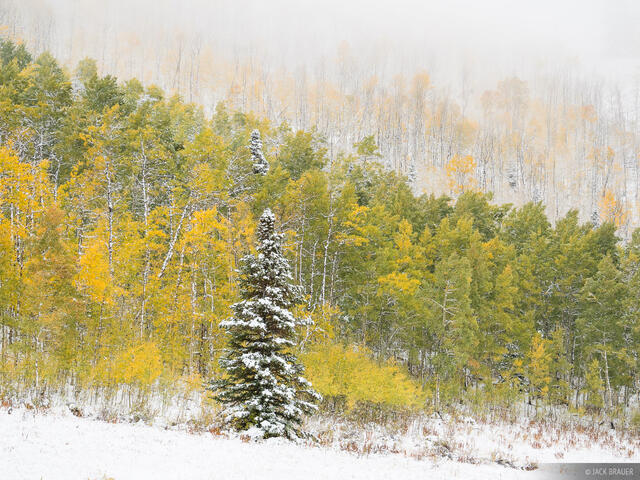 Utah, Wasatch Range, Willow Heights Trail, aspens