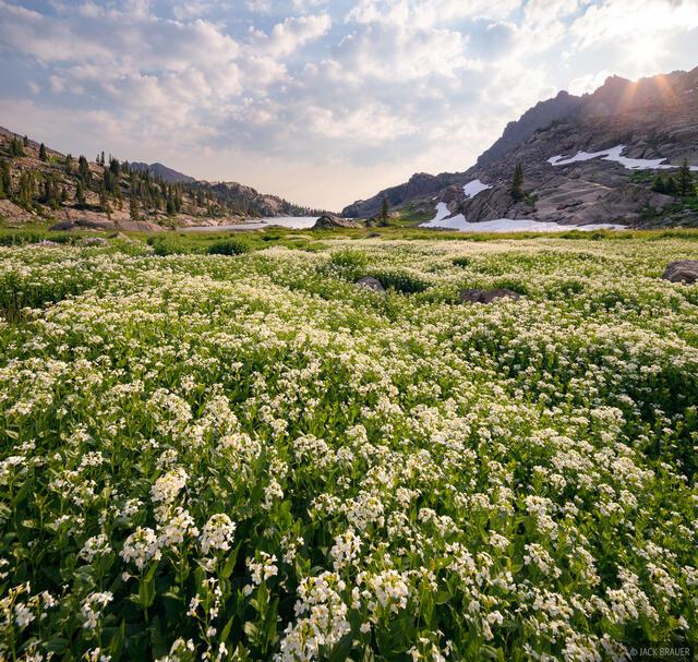 Bubble Lake, Colorado, Gore Range, wildflowers, Eagles Nest Wilderness, Heartleaf Bittercress