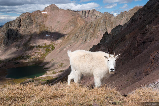 Colorado, Deluge Lake, Gore Range, mountain goat, Eagles Nest Wilderness