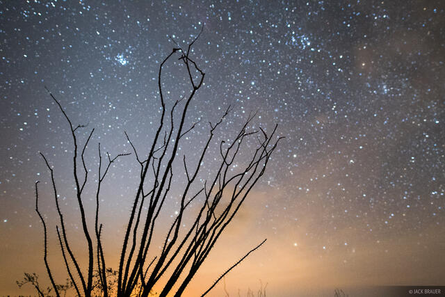 Arizona, Kofa National Wildlife Refuge, ocotillo, Kofa Mountains, stars